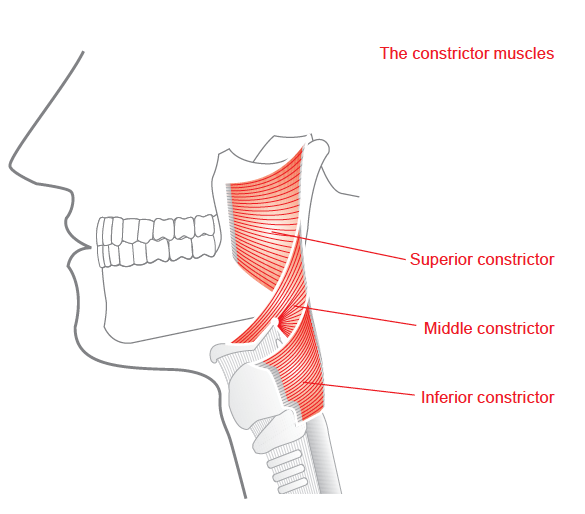 The Throat Cvt Research Site